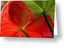 Red And Green Anthurium Greeting Card by Ranjini Kandasamy