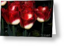 Red And White Tulips Greeting Card by Kathleen Struckle