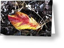 Red And Yellow Greeting Card by John Rizzuto