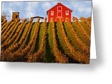 Red Barn In Autumn Vineyards Greeting Card by Garry Gay