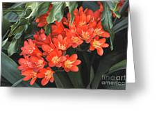 Red Blossoms At Lax Greeting Card by Deborah Smolinske