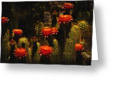 Red Cactus Flowers Greeting Card by Saija  Lehtonen