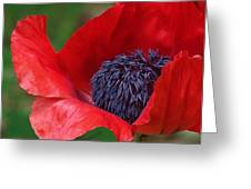 Red Carpet Rolled Out Greeting Card by Kathleen Luther