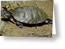 Red Ear Slider Greeting Card by Todd Hostetter