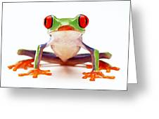 Red-eye tree frog 2 Greeting Card by Lanjee Chee