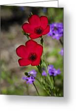 Red Flax  Greeting Card by Saija  Lehtonen
