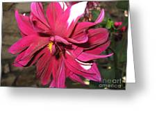 Red Flower In Bloom Greeting Card by HEVi FineArt