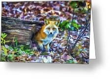 Red Fox At Home Greeting Card by John Haldane
