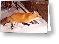 Red Fox Greeting Card by Edward Caraccioli