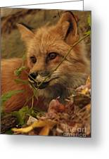 Red Fox In Autumn Leaves Stalking Prey Greeting Card by Inspired Nature Photography Fine Art Photography