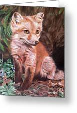 Red Fox Kit Greeting Card by Nancy Andresen