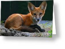 Red Fox Greeting Card by Kristin Elmquist