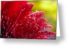 Red Gerbera Greeting Card by Boon Mee