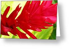 Red Ginger Flower Greeting Card by James Temple