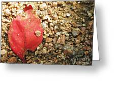 Red Leaf Greeting Card by Venus