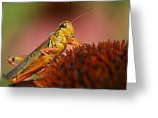 Red Legged Locust Greeting Card by Juergen Roth