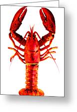 Red Lobster - Full Body Seafood Art Greeting Card by Sharon Cummings