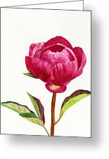 Red Peony With Leaves Greeting Card by Sharon Freeman