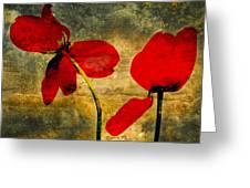 Red Petals Greeting Card by Bernard Jaubert