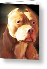 Red Pit Bull By Spano Greeting Card by Michael Spano