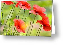 Red Poppies Greeting Card by FunCards