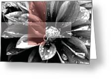 Red Rain Blossom Greeting Card by Jamie Lynn