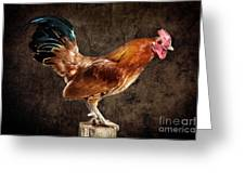 Red Rooster On Fence Post Greeting Card by Cindy Singleton