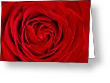 Red Rose Greeting Card by Aqnus Febriyant