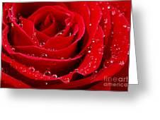 Red Rose Greeting Card by Elena Elisseeva
