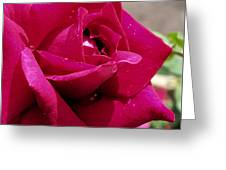 Red Rose Up Close Greeting Card by Thomas Woolworth