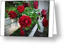 Red Roses - White Fence Greeting Card by Brian Wallace