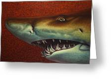 Red Sea Shark Greeting Card by James W Johnson
