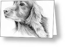 Red Setter Greeting Card by Mary Mayes