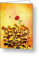 Red Sunflower Greeting Card by Bob Orsillo