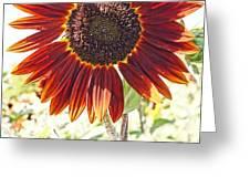 Red Sunflower Glow Greeting Card by Kerri Mortenson