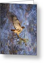 Red-tailed Hawk Applauding The Early Morning Sunrise Greeting Card by J Larry Walker