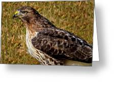 Red Tailed Hawk Close Up Greeting Card by John Absher