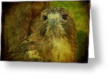 Red-tailed Hawk II Greeting Card by Sandy Keeton