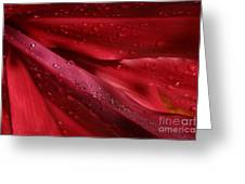 Red Ti The Queen Of Tropical Foliage Greeting Card by Sharon Mau