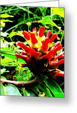 Red Torch Ginger Flower One Greeting Card by Tina M Wenger