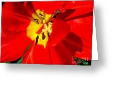 Red Tulip Greeting Card by Nina Ficur Feenan