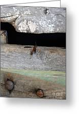 Red Wasp Greeting Card by Brenda Dorman