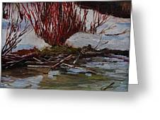 Red Willows Greeting Card by Suzanne Tynes