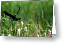Red Winged Blackbird Greeting Card by Andrew Lahay