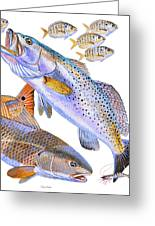 Redfish Trout Greeting Card by Carey Chen