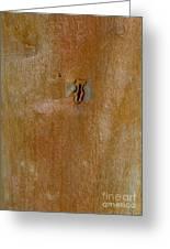Redgum Tree Greeting Card by Steven Ralser