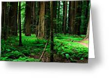 Redwood Path Greeting Card by Mark Hammon