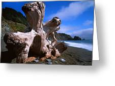 Redwood Roots Greeting Card by Ray Mathis
