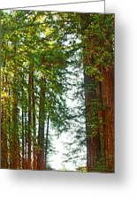 Redwood Wall Mural Panel 2 Greeting Card by Artist and Photographer Laura Wrede