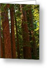 Redwood Wall Mural Panel Three Greeting Card by Artist and Photographer Laura Wrede